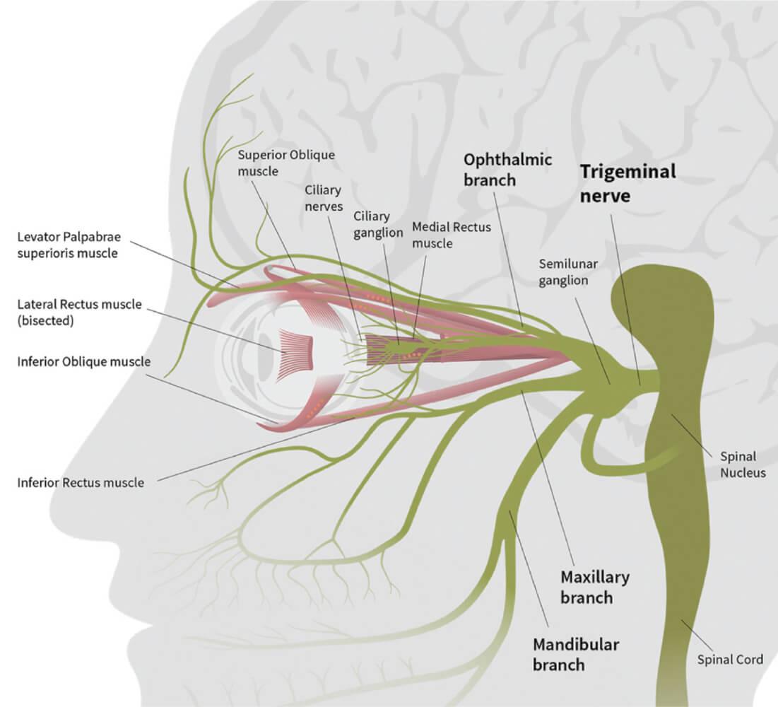 neurolens diagram